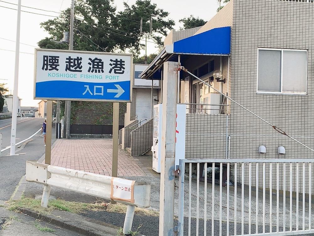 イカ釣り 湘南・三浦 鎌倉グルメ幕府